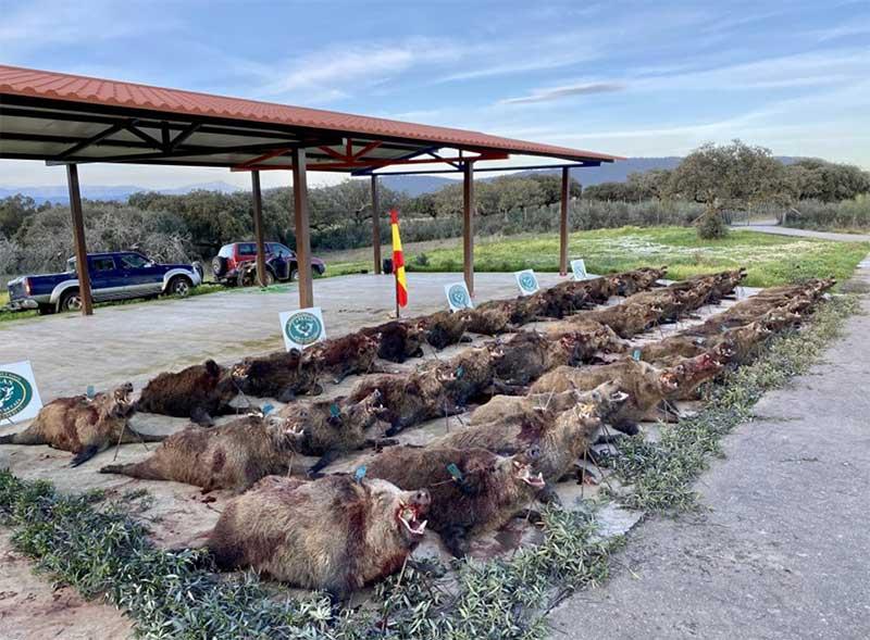 Resultado Montería El Cotano f 2021 Cabezas S Caza