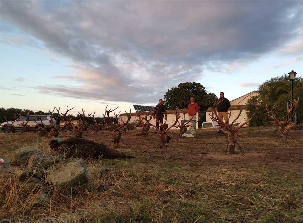 Resultado Montería Loma del Caballero 2020 Iberian Hunting