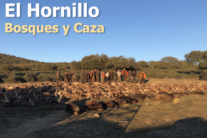 El Hornillo. Información Montería